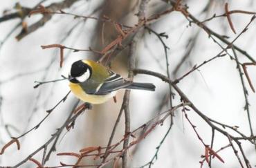 Winter Scavenger Hunt at Tatton Park